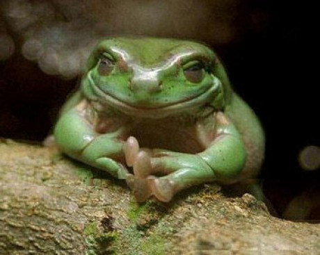 Fayezbook photo album weird stuffs thinking frog - Funny frog pictures ...